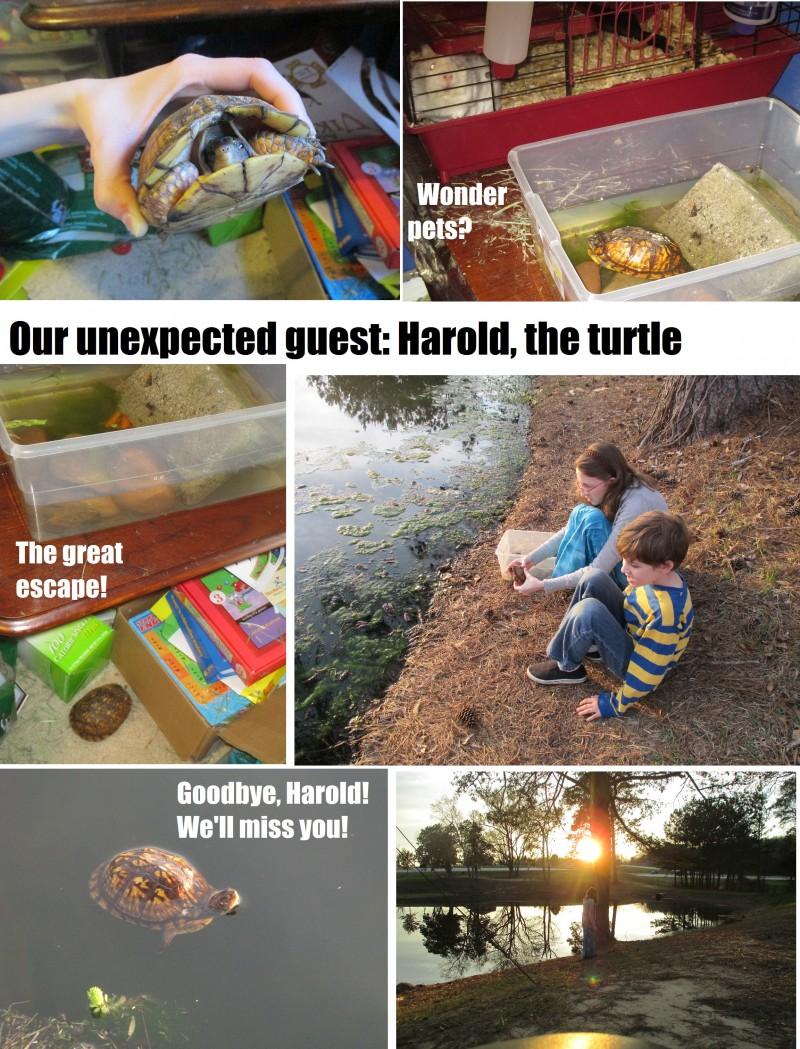 Harold the Turtle